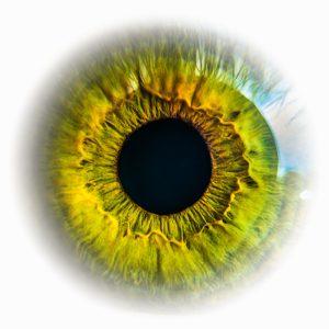 Bild vom Auge